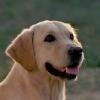 Amber 2003
