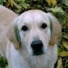 Amber 1999