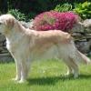 Amber 9 3/4 Jahre