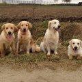 Moss, Lou, Jaymee , Penny