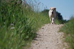 2009/06 Foto-Walk